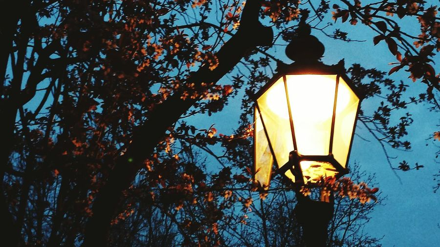 Low angle view of illuminated lamp post