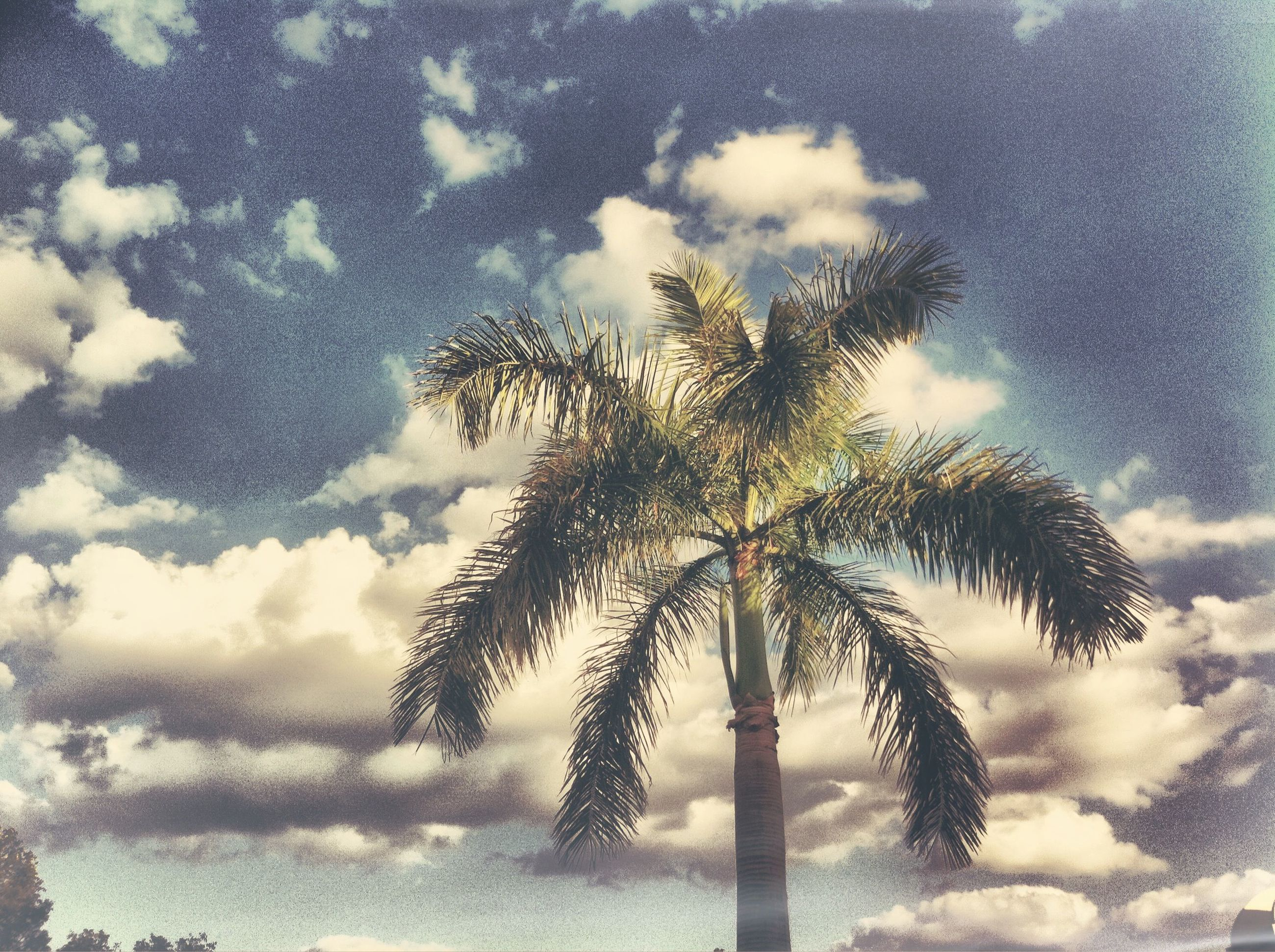 low angle view, tree, sky, palm tree, silhouette, cloud - sky, tranquility, nature, growth, beauty in nature, cloudy, tree trunk, sun, cloud, scenics, tall - high, sunlight, tranquil scene, branch, outdoors