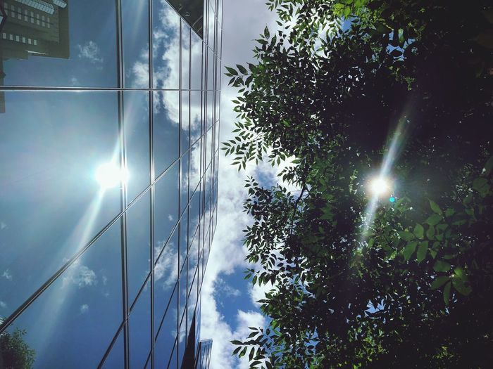 Double Sunlight Lanch Time Skyscraper Sky And Clouds Reflected Light Double Sunlight Tree Sky Plant Low Angle View Nature No People Outdoors Reflection Day Cloud - Sky Sunlight Green Color Growth Built Structure Architecture Beauty In Nature Electricity  Building Exterior Silhouette Street Light The Great Outdoors - 2018 EyeEm Awards The Architect - 2018 EyeEm Awards The Street Photographer - 2018 EyeEm Awards EyeEmNewHere The Creative - 2018 EyeEm Awards 10 EyeEmNewHere