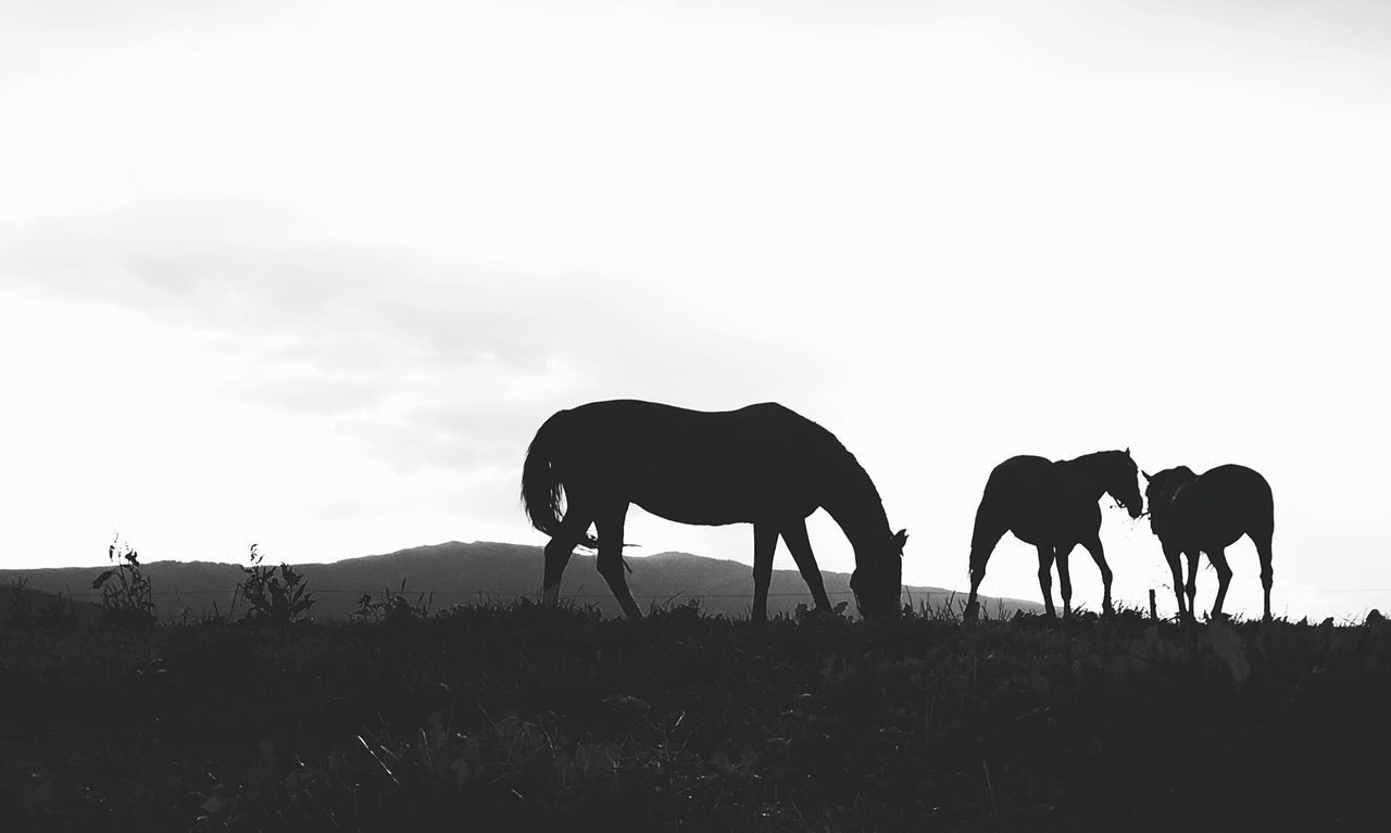Silhouette horses on field against sky