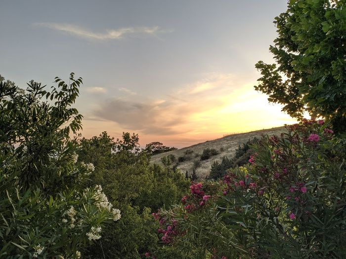 Scenic view of flowering plants and trees against sky during sunset