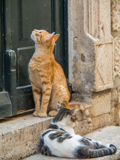 Lovely cats Different Colors Ginger Cat Olympus Animal Themes Architecture Architecture Details Black And White Cat Cats Day Domestic Animals Domestic Cat Edithnerophotography Feline Mammal No People Outdoors Pets Sitting Two Cats Couple Of Cats Waiting Cats