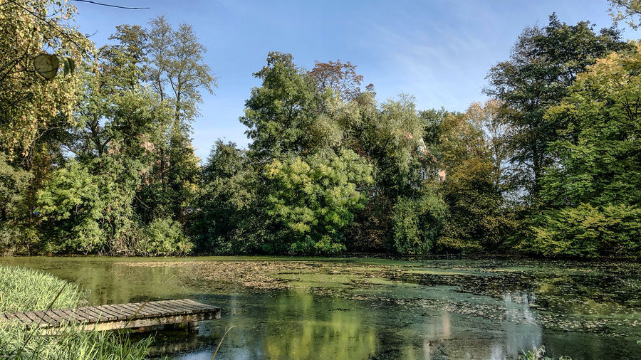 Quiet scene in city park in Hamburg, Germany Tree Plant Water Growth Green Color Reflection Beauty In Nature Tranquility Lake Nature Scenics - Nature Tranquil Scene Waterfront Day No People Sky Land Non-urban Scene Outdoors Swamp