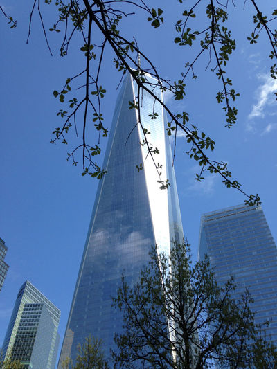 Architecture Branch Building Exterior Built Structure City Day Growth Low Angle View Modern Nature No People One World Trade One World Trade Center Outdoors Sky Skyscraper Spring Buds Springtime At One World Trade Springtime In NYC Sunlight Tall Tree Tree Of Live The Architect - 2017 EyeEm Awards