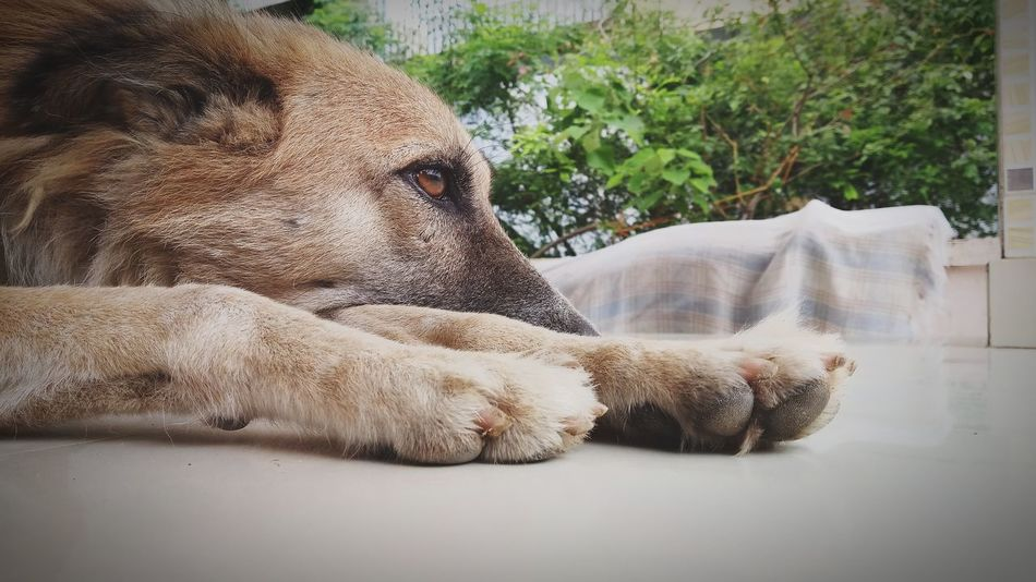 Maninagar Ahmedabad India My City Home Handsatwork Dogs Dogs Of EyeEm Doglover Dog Photography Dog Portrait Doggy Love EyeEm Selects Leopard Tree Close-up Carnivora Stray Animal Whisker Tabby