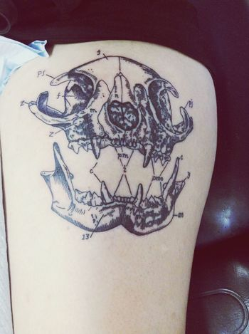 Tattoo Cat Skull Anatomy First Eyeem Photo