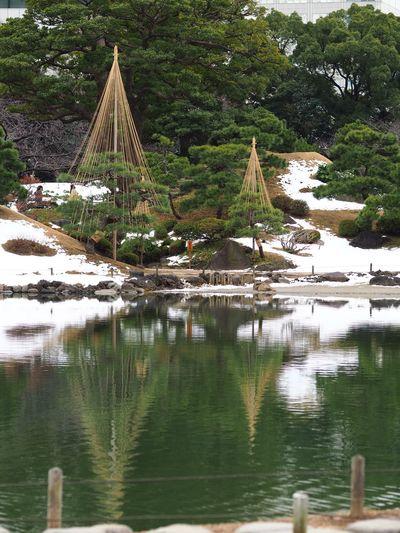 松の雪吊り。Protect the pine from fallen snow. Olympus OM-D E-M5 Mk.II Winter Japanese Garden Pine Pine Tree Tree Water Day Outdoors No People Tranquil Scene Lake Scenics Tranquility
