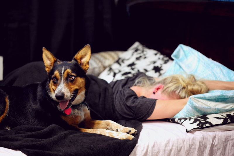 A Girl And Her Dog Bed Bedroom Comfortable Cute Cute Pets Dogs Family Girls Home Home Sweet Home Love Lying Down Pet Owner Pillow Portrait Puppy Relationship Relaxation Resting Utah Young Woman