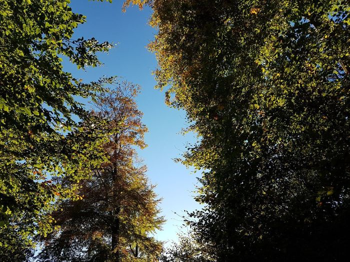 Tree Plant Growth Sky Beauty In Nature Low Angle View Nature Tranquility No People Autumn Scenics - Nature Tranquil Scene Day Land Outdoors Green Color Forest Non-urban Scene Change Branch Tree Canopy  Coniferous Tree
