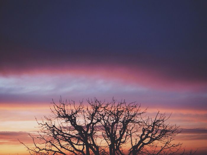 Low angle view of bare trees at sunset