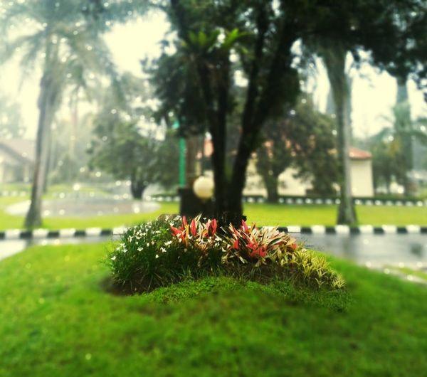Cisarua Puncak Bogor First Eyeem Photo