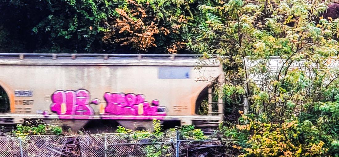tracks Train Tree Plant