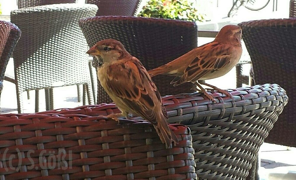 Birds Sparrows Animals Things With Wings  Animal_collection Eyeem Best Shots - Animals Animaltastic Bird Flying EyeEm Best Shots