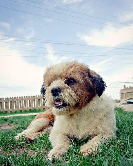 멍멍이..😚😚 멍멍이 강아지 청춘불패 촬영지 대부도 조개구이 출사 Dog 사진