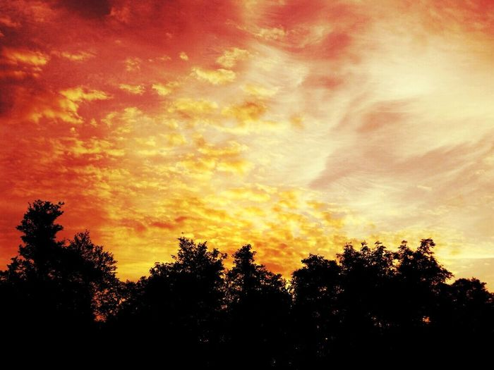 'it's a New Dawn, it's a New Day it's a New Life....' my first Sunrise because I'm a night owl Sunrise Colors Sky And Clouds Red And Gold Colour The Great Outdoors - 2016 EyeEm Awards First Sunrays Dawn Over The Woods Nature In The Woods Beliebte Fotos 43 Golden Moments