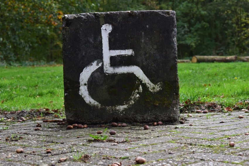 disabled parking sign on concrete Day No People Communication Nature Disabled Access Plant Number Disabled Sign Grass Outdoors Sign Wheelchair Tree Close-up Differing Abilities Lawn Focus On Foreground Absence