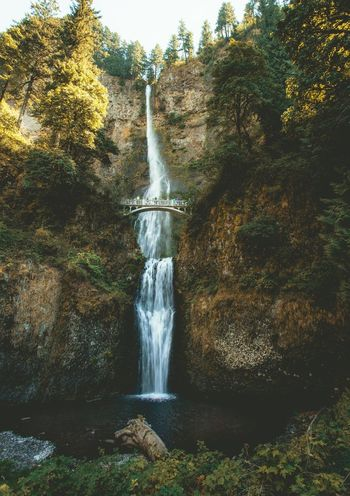 Multnomah Falls Waterfall Motion Flowing Water Water Long Exposure Beauty In Nature Rock - Object Scenics Nature Cliff Power In Nature Forest Tree Tranquil Scene Outdoors Day