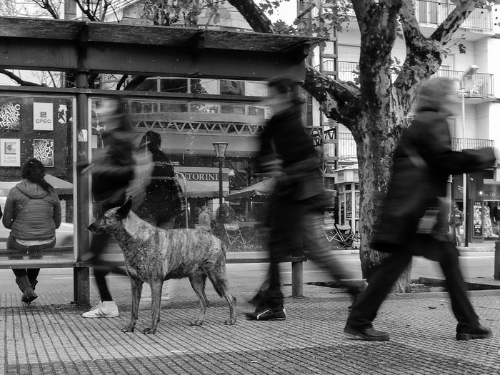 Some people walking at Roca square in the rain. 2016-10-18. Río Cuarto, Córdoba, Argentina. Adult Argentina B&w Street Photography Blurred Motion Built Structure Day Dog Indoors  Mammal Men Nikon Only Men People Person Rainy Days Street Streetphotography Monochrome Photography