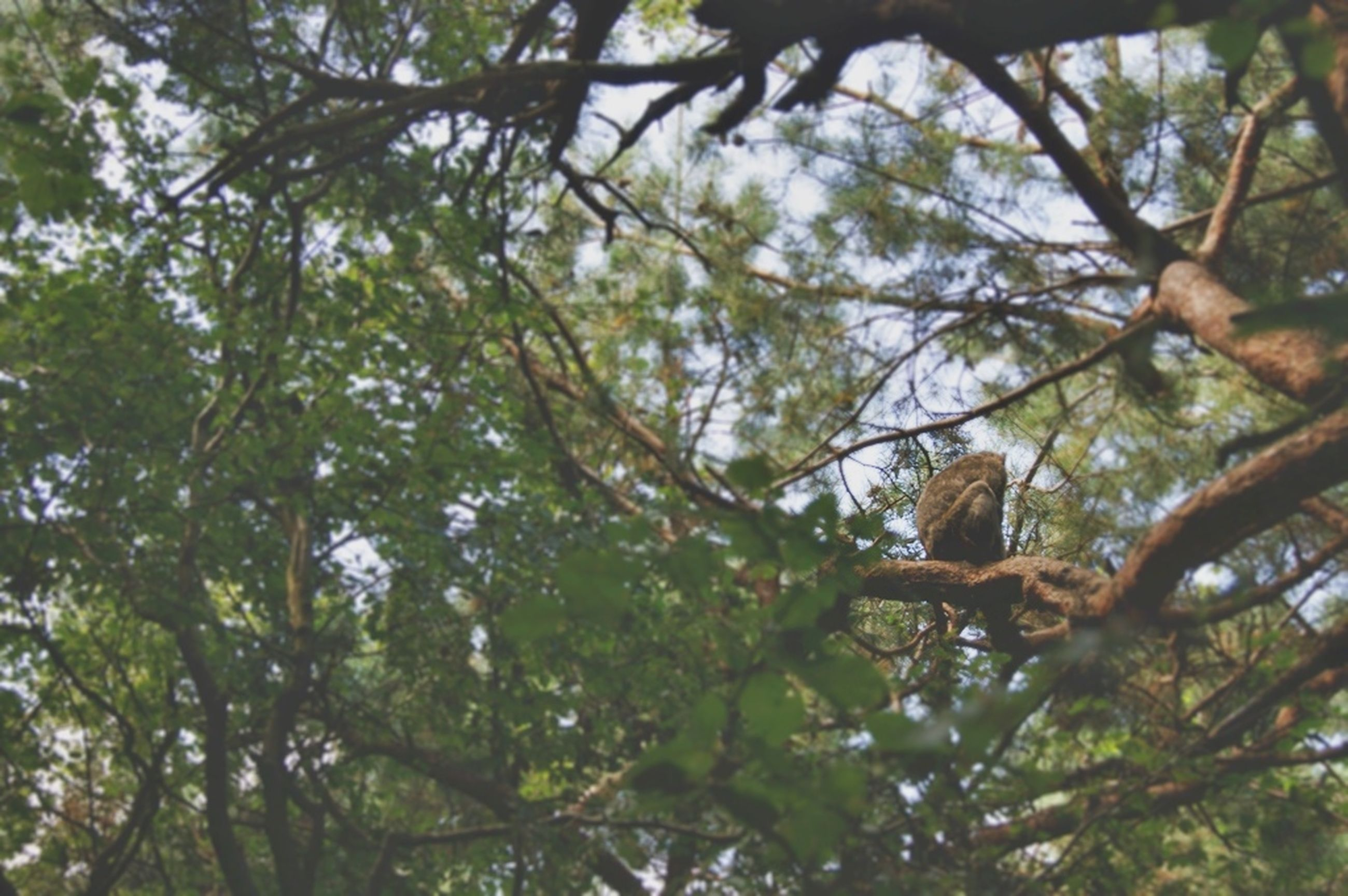 tree, low angle view, branch, growth, nature, green color, tree trunk, tranquility, beauty in nature, sky, day, leaf, outdoors, no people, forest, backgrounds, full frame, sunlight, directly below, scenics