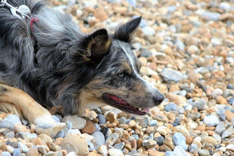 Alfie ❤ Seaside Pebble Beach Doglover Dogslife Cute Dog  Cute Pets Doglife