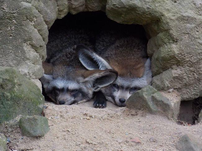 Praha ❤️ Travel Zoo