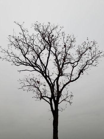 Alon tree Tree Branch Single Tree Bird Nature Bare Tree Beauty In Nature