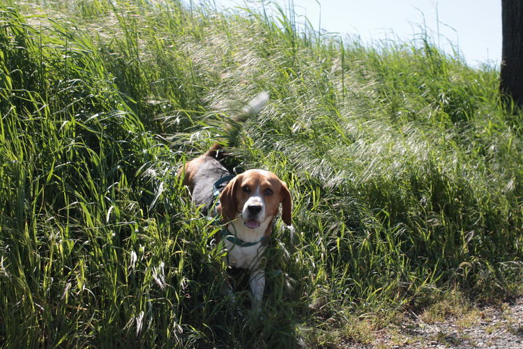 High angle view of beagle amidst plants