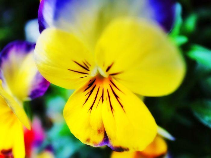 Flowers Bokeh