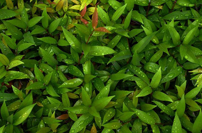 Full frame shot of chopped green plants