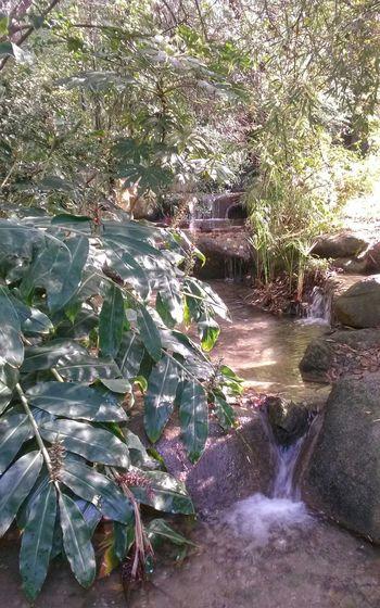 Portugal Lisbon Lisboa Gulbenkian Garden Nature Garden Jardim Trees Rochas Riacho  Water