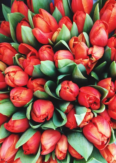 Colorful Nature Bright Colors Orange Color Red Coral Color Tulip spring into spring Groceries Shopping Farmers Market Copy Space Over Nature Texture In Nature Texture Background Freshness Full Frame Food And Drink Backgrounds Food Red Wellbeing Large Group Of Objects Abundance Still Life