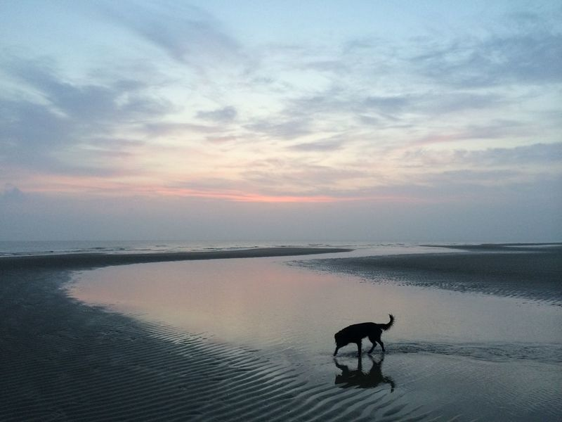DayOnTheBeach Sunrise Oostkapelle Beach Netherlands