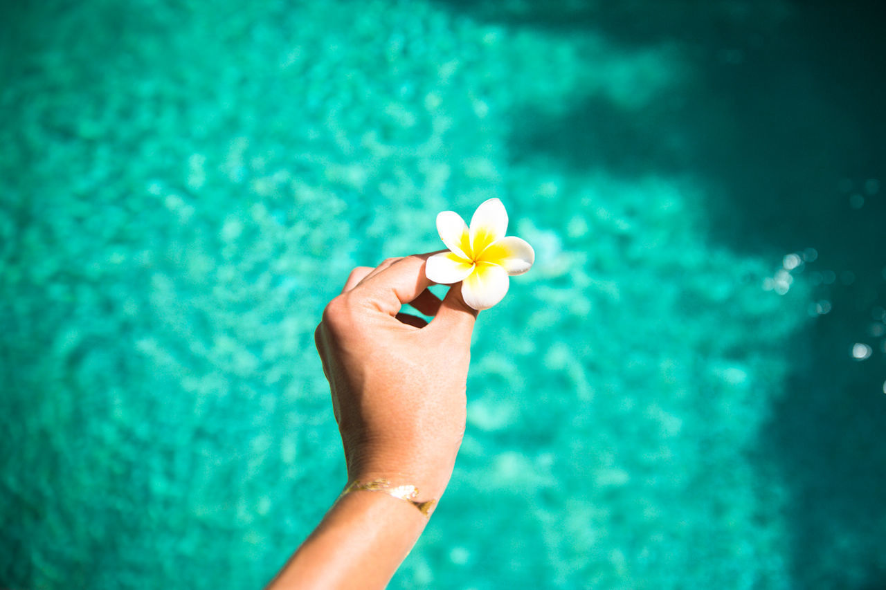 flower, one person, human body part, holding, swimming pool, water, focus on foreground, close-up, beauty in nature, one woman only, human hand, nature, frangipani, day, outdoors, freshness, only women, flower head, adult, fragility, adults only, people