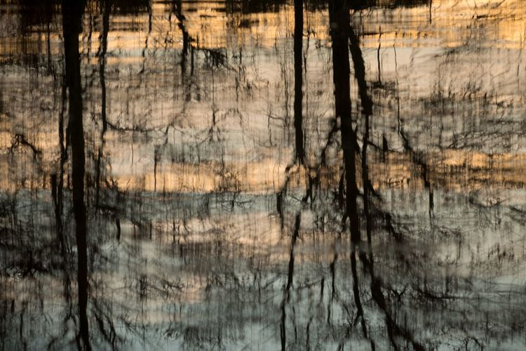 Reflection of Trees Abstract Nature Abstract Water Reflection Trees Lake Ripples FreshonEyeem Selected For Premium Premium Collection Premium