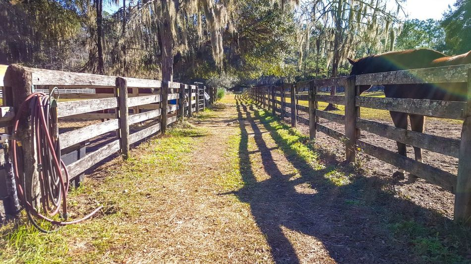 Horses, fences , posts, Check This Out Hello World Hanging Out Relaxing Enjoying Life One Of My Favorite Things Bluffton Sc, Everyday Joy