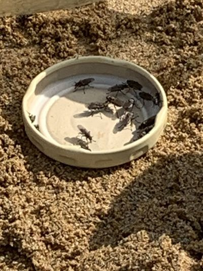 High angle view of drink on sand