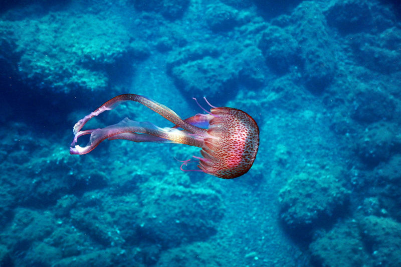 Animal Themes Animals In The Wild Beauty In Nature Blue Coral Day Ecosystem  Nature No People One Animal Outdoors Scenics Sea Sea Life Swimming UnderSea Underwater Vacations Water