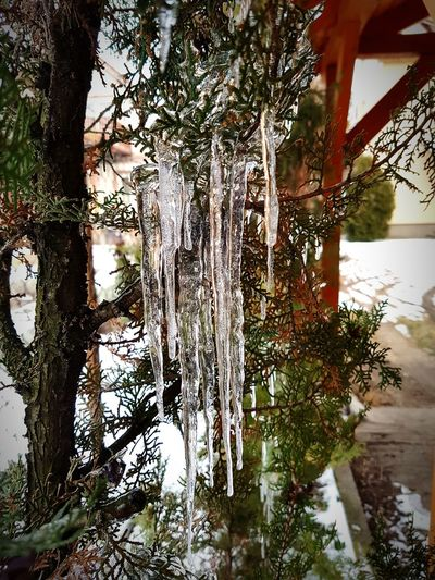 icicles Icicles