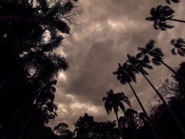 Low angle view of silhouette trees against cloudy sky