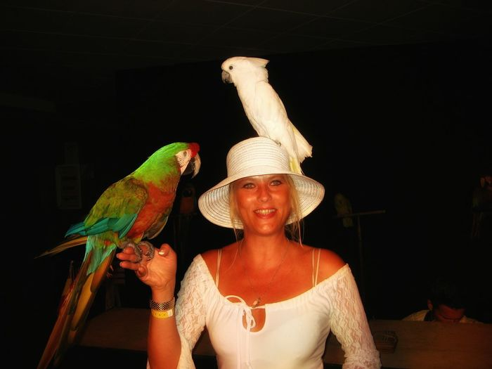 Parrots perching on smiling woman hand and head at night