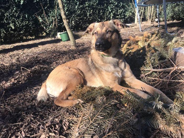 Mammal Canine