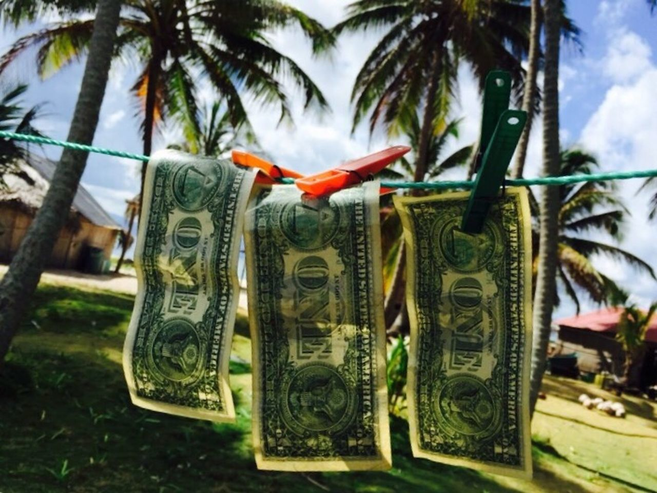 paper currency, currency, focus on foreground, finance, day, business, tree, plant, palm tree, no people, close-up, wealth, text, nature, hanging, growth, tropical climate, animal, animal themes, representation