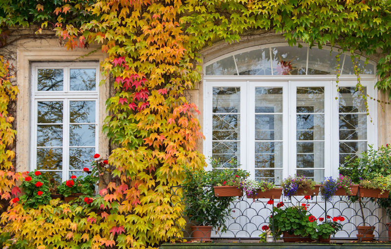 Orange ivy on house with white window Plant Window Flower Architecture Flowering Plant Built Structure Building Growth Building Exterior Beauty In Nature Nature Freshness No People House Day Residential District Glass - Material Outdoors Multi Colored Fragility Flower Pot Window Frame