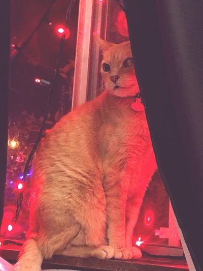 View of cat in illuminated room