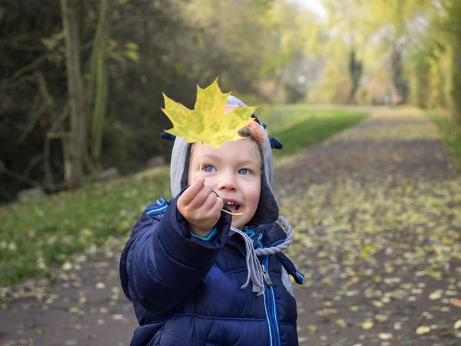 Smiling boy holding a yellow leaf in his hand Autumn Leaf Yellow Portrait Boy Young Childhood Child Children Photography Kid Kids Kids Being Kids Kidsphotography Close-up Headshot Blue Green Bookeh Junge Kinder What Who Where