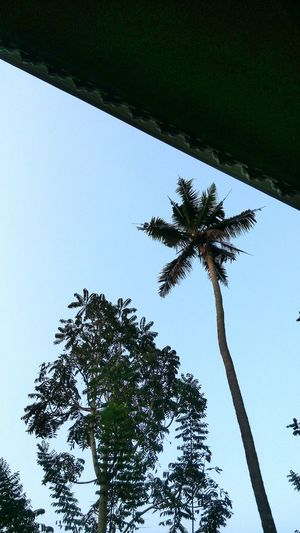 India Kerala India Kerala The Gods Own Country ;) Kerala Coconut Trees Coconut Trees Kerala Sky And Clouds