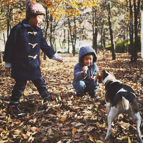 秋季 Warm Clothing Friendship Pets Bonding Togetherness Tree Childhood Full Length Dog Autumn