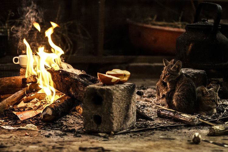 Bonfire Burning Close-up Fire Fire - Natural Phenomenon Fireplace Firewood Flame Focus On Foreground Food Food And Drink Heat - Temperature Indoors  Log Nature No People Selective Focus Wood Wood - Material Focus On The Story Moments Of Happiness