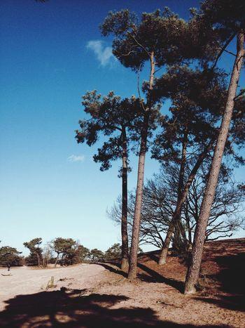 Trees Dunes Desert Lovely Weather