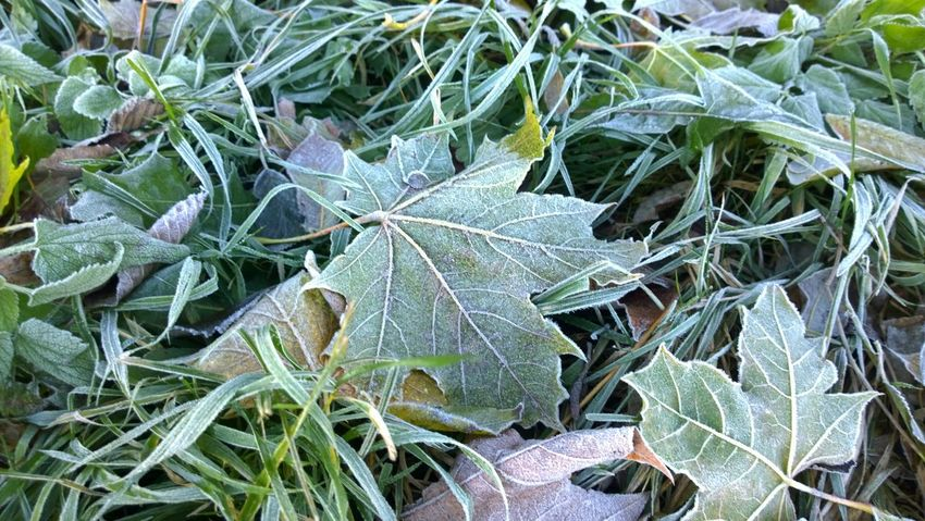Frozen Frozen Grass Frozen Nature Grass Green Green Color Leaf Nature